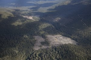 Tasmanian forest after logging